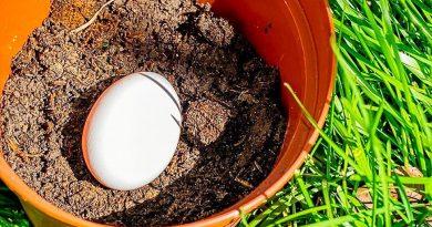 Saksının Dibine Yumurta Koydu. 6 Hafta Sonra Olanlar…