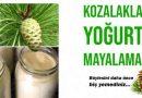 Çam kozalağı ile yoğurt mayalama tarifi | ÇOK LEZZETLİ OLDU!
