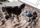 Tam 160 tanesi evinin bahçesinde gömülü halde bulundu